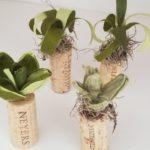 annspaper-crepe-paper-succulent-miniatures-wine-corks