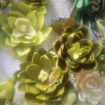 More succulents